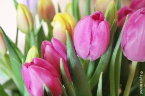 Flower-Februar-4