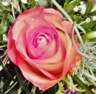 Flower-Februar-6